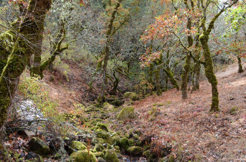 Oak Woodland Opportunity